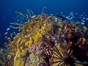 Nachttauchen Sonderkurs Specialty Hurghada Sharm Quseir
