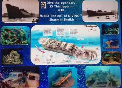 Thistlegorm wreck diving Sharm El Sheikh