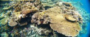 Korallenriff tauchplatz Sharm El Sheikh
