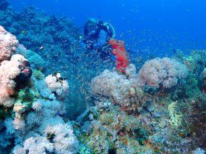 Dive area Sahl Hasheesh Diving
